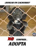 adopta