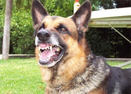 perro-enojado