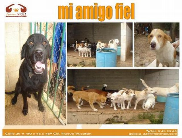 mi amigo fiel