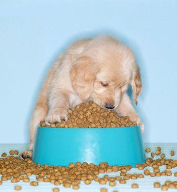 La comida de tu perro contiene aditivos t xicos adopta un amigo no lo compres - Comida para cachorros de un mes ...