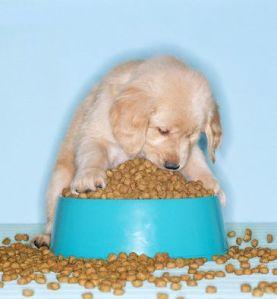 comida_perros