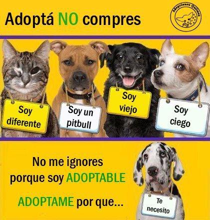 Dogs Free To Good Home Ni