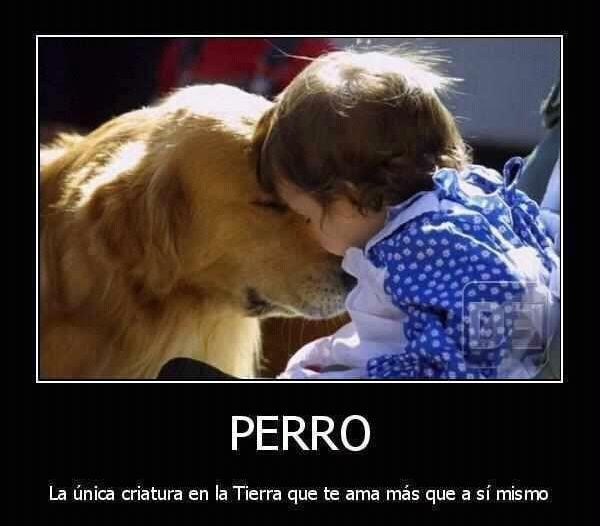 El amor de un perro